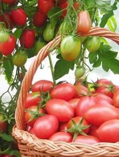 Десертный томат