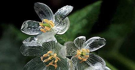 Секрет «хрустального цветка»