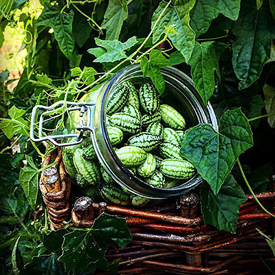 Огурцы в арбузной «шкуре»