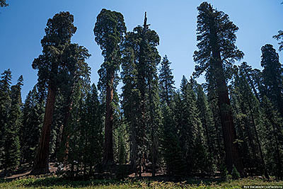 Удивительные особенности дерева