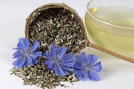 Цикорий: описание растения