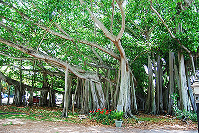 Разновидности деревьев