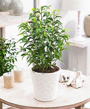Комнатные растения-спасатели