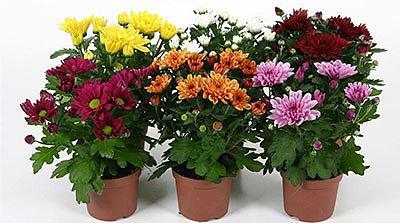 Растения-кондиционеры