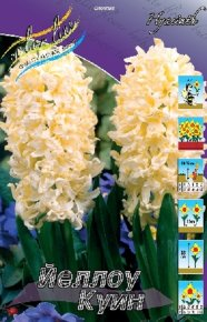 Гиацинт Йеллоу Куин (Hyacinth Yellow Queen), 5шт, Color Line
