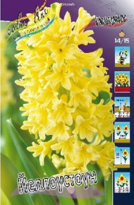 Гиацинт Йеллоустоун (Hyacinth Yellowstone), 5шт, Color Line