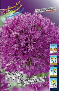 Лук декоративный Пурпл Сенсейшн (Allium Purple Sensation), 5шт, Color Line