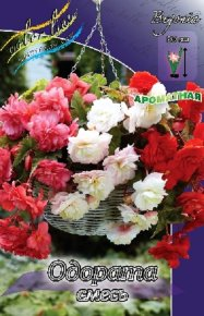 Бегония Одората (Begonia Odorata Mixed), смесь, 3шт, Color Line