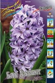 Гиацинт Блю Джиант (Hyacinth Blue Giant), 5шт, Color Line